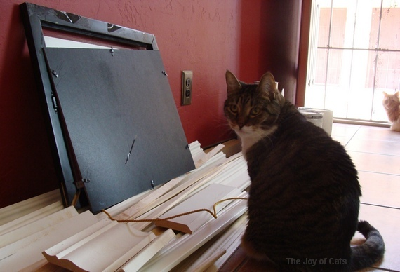 picture rail moldings and cats